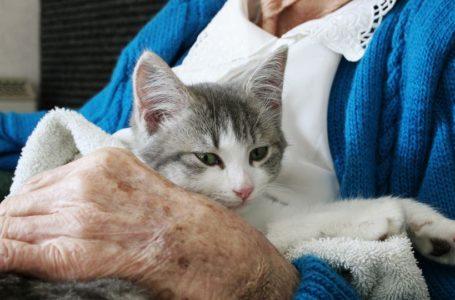 الحيوانات الأليفة تساعد المسنين في السيطرة على الألم المزمن